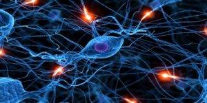 Beyin ve Öğrenme, Uyku ve Hafıza