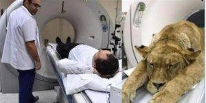 İzmir'deki hastanede şaşırtan görüntü! Aslan tomografi cihazında