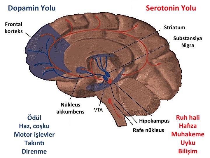 beyin-gorseli-001.jpg